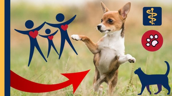 Dog Behavior Dog Training Pets & Animals - Holistic Approach